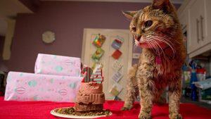 poppy-oldest-cat-main_060614