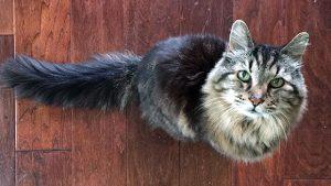 oldest-living-cat-header_tcm25-391830_tcm30-410344